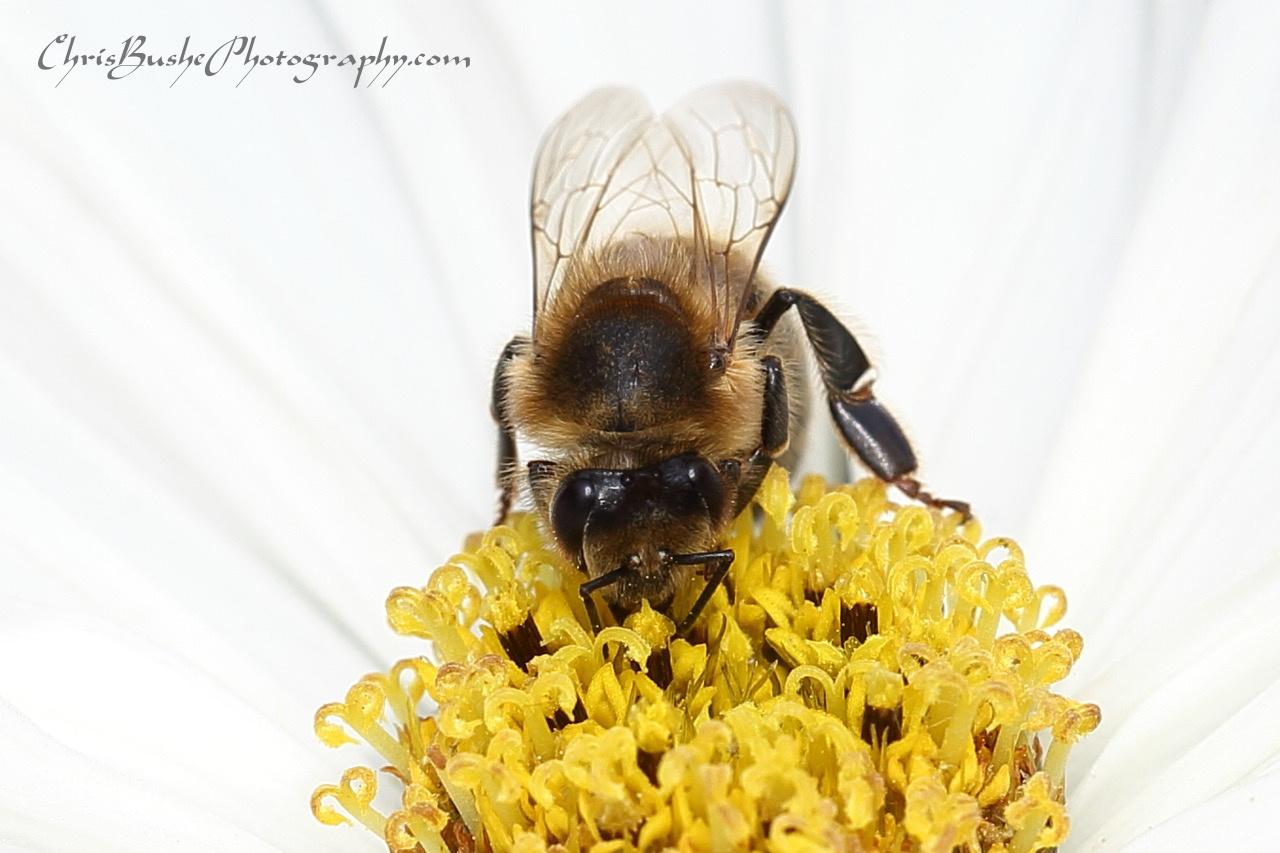 Best bee 10