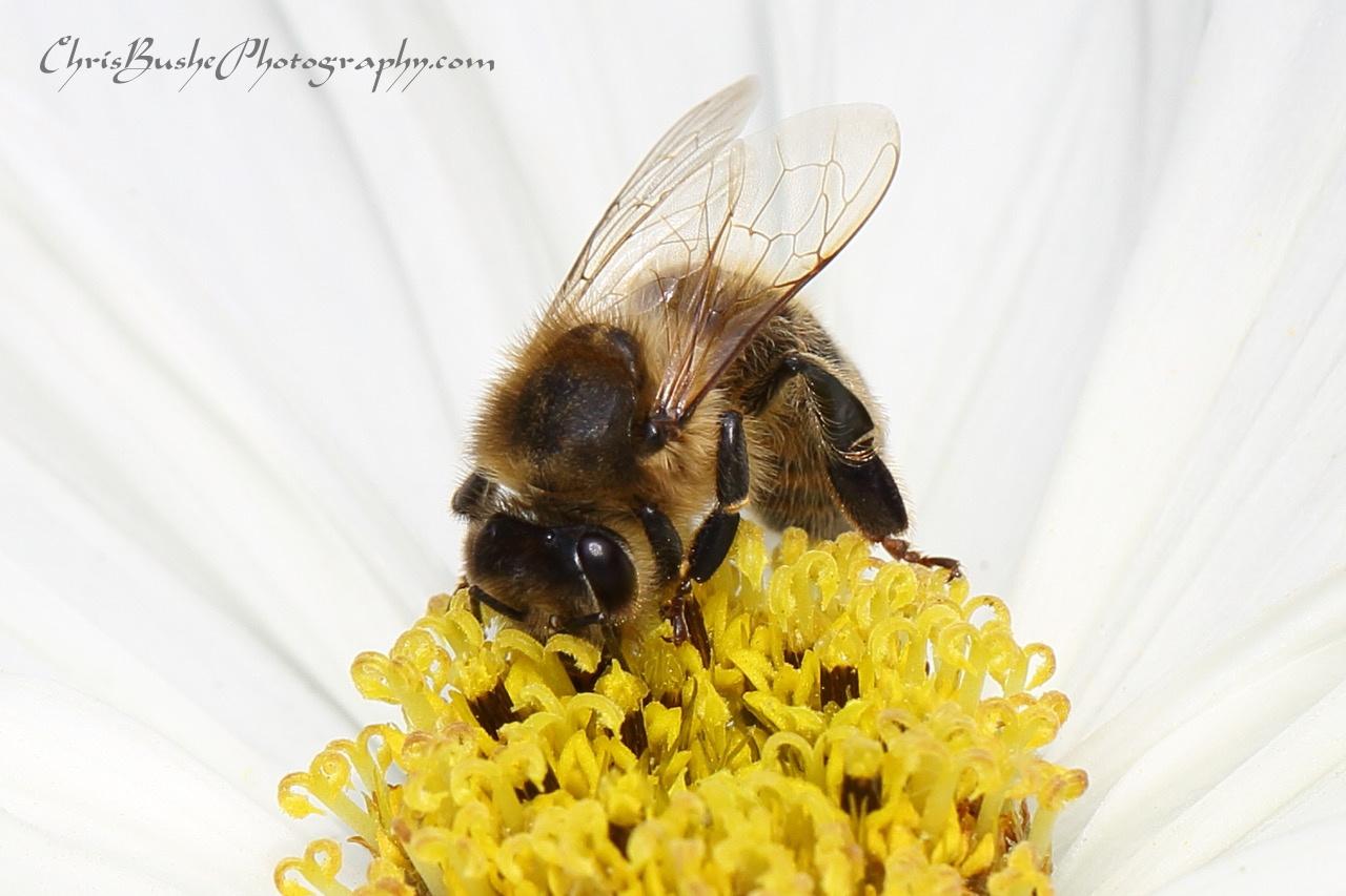 Best Bee 11