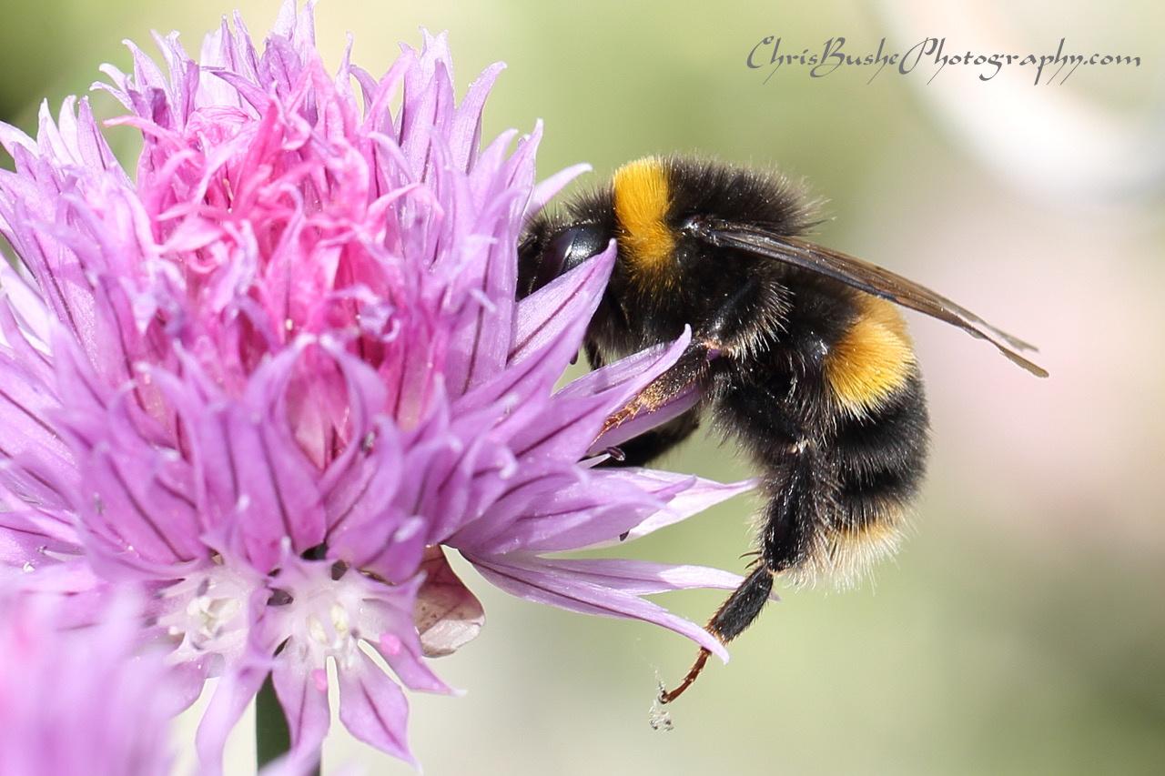 best bee 13