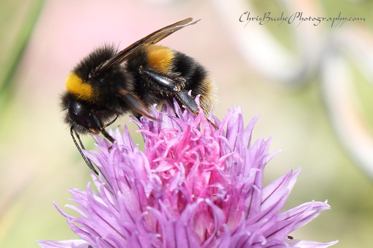 Best Bee 14