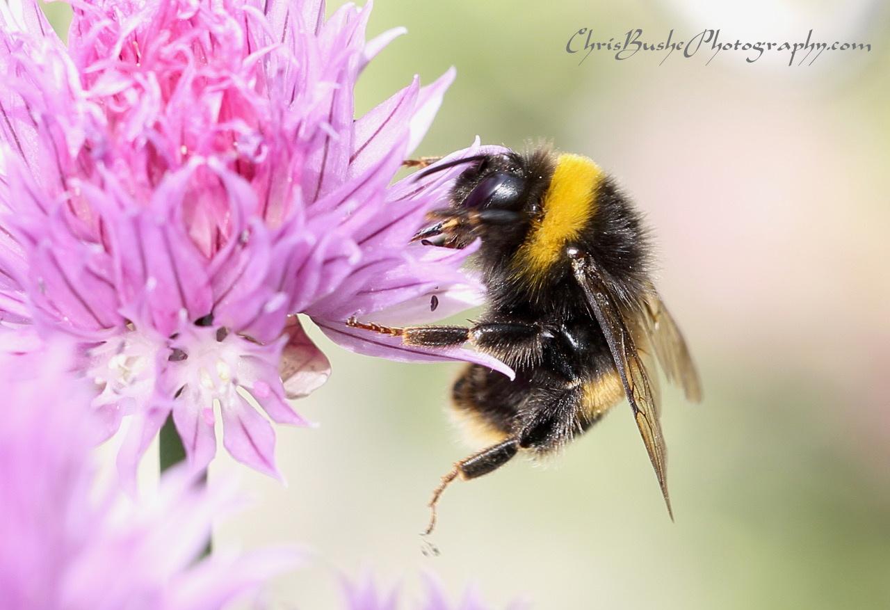 Best bee 15