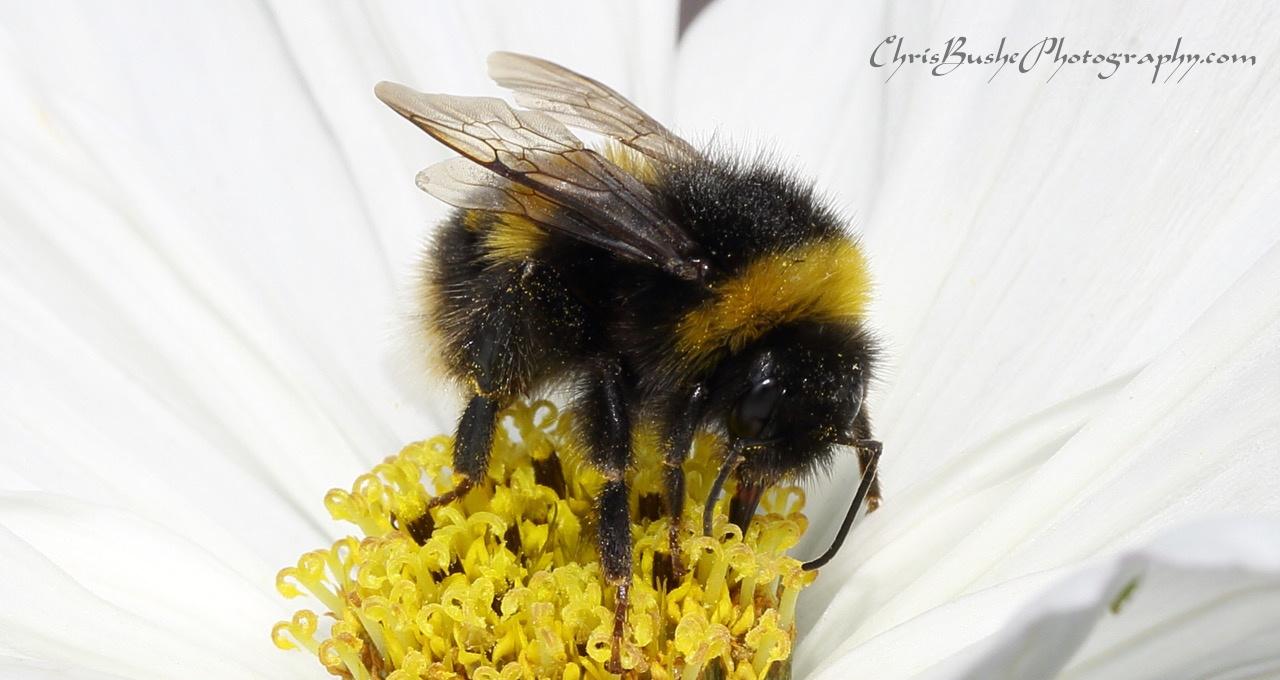 Best bee 16