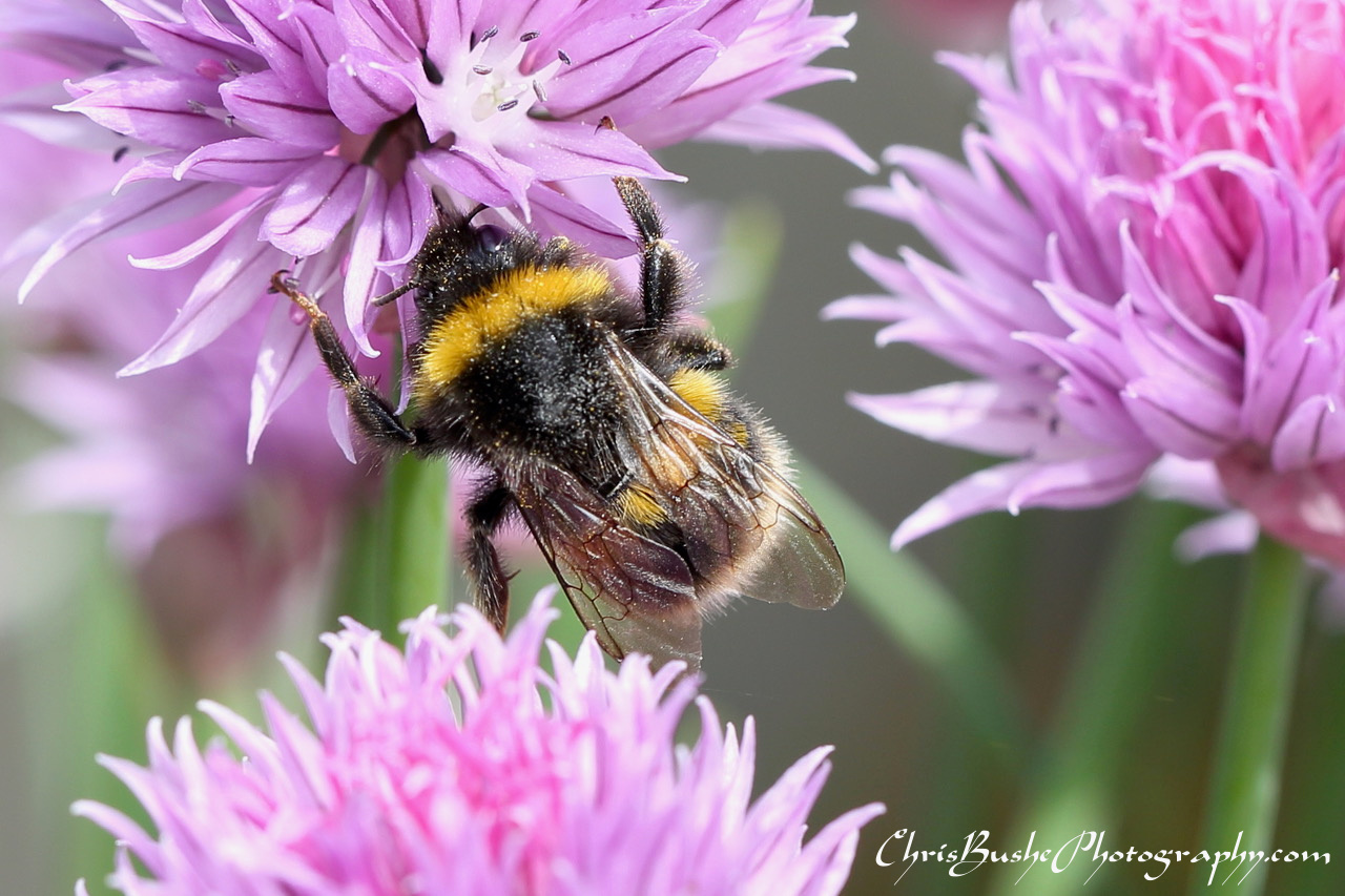 best bee 17 (1)