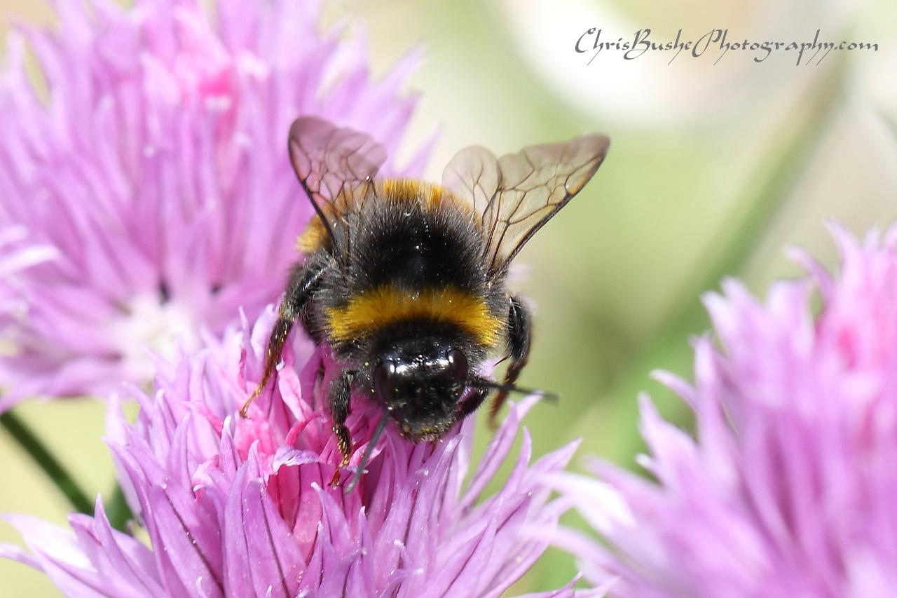 Best bee 18