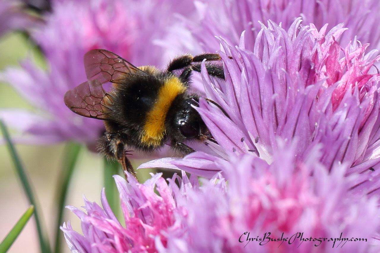best bee 19 (1)