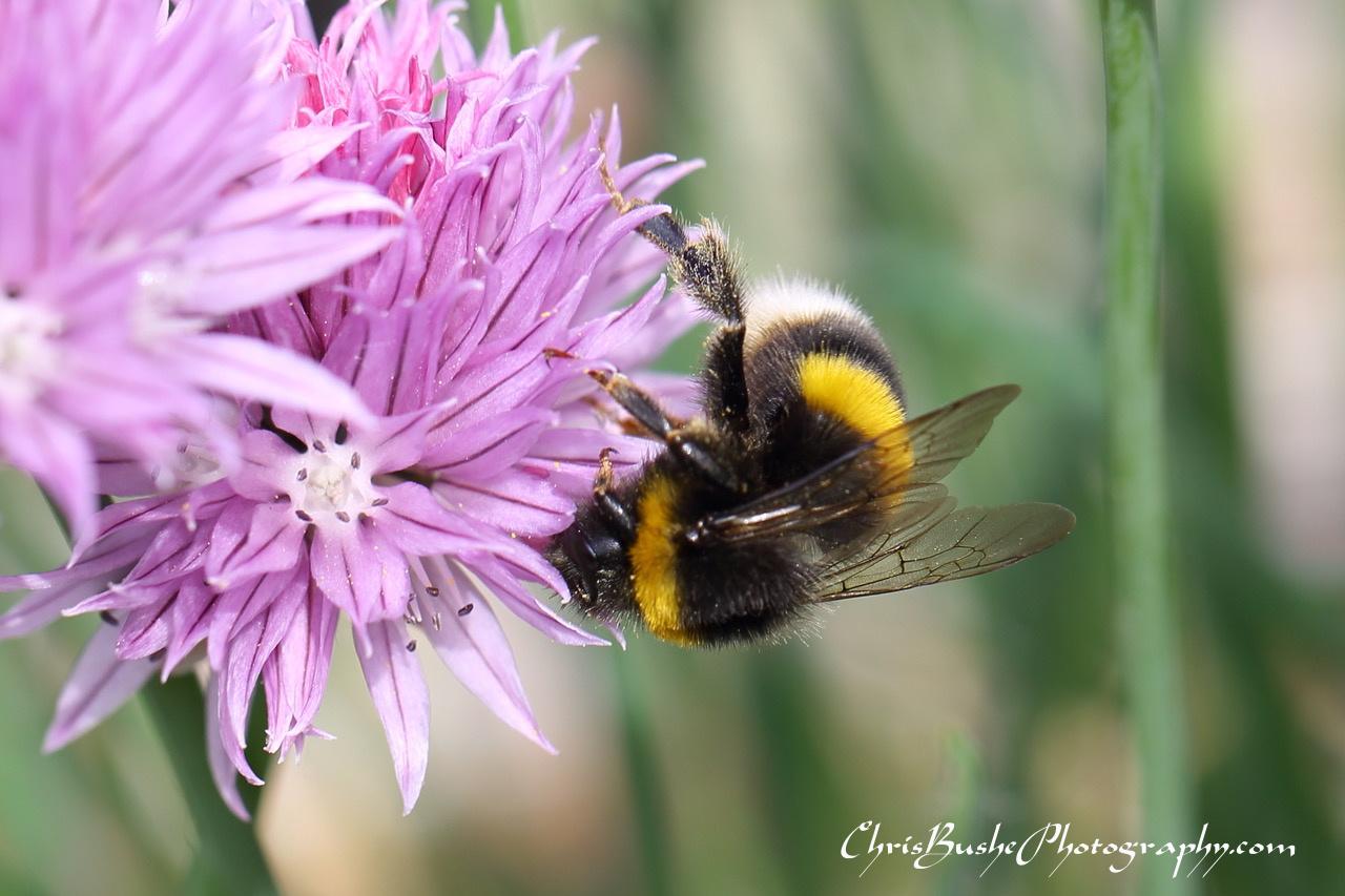 Best Bee 2