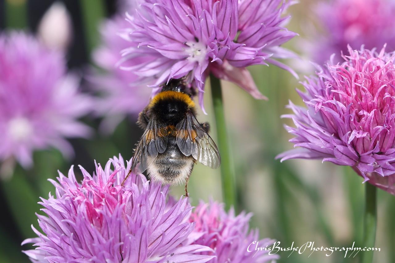 Best Bee 3