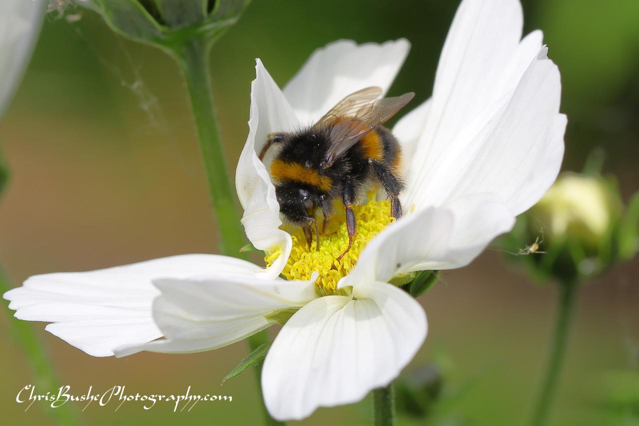 Best Bee 4