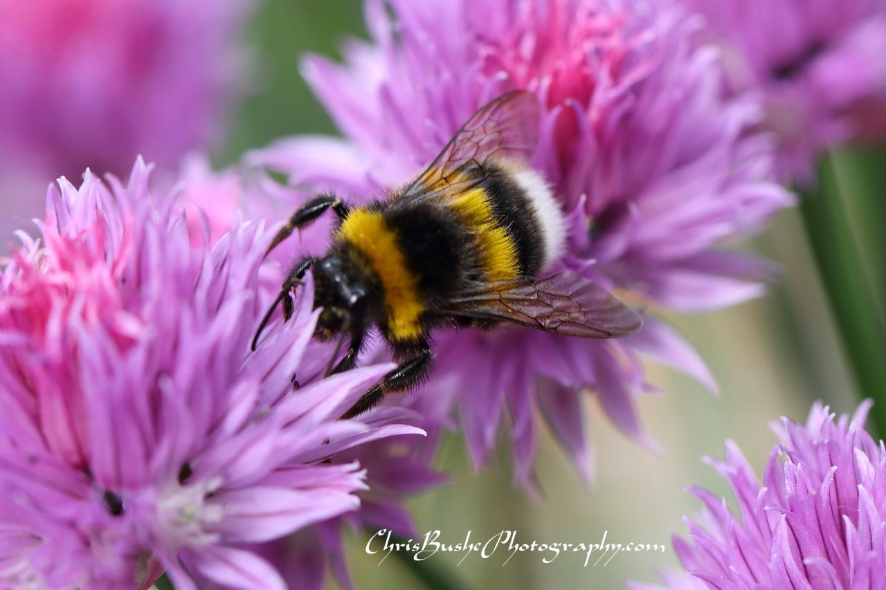 Best bee 5