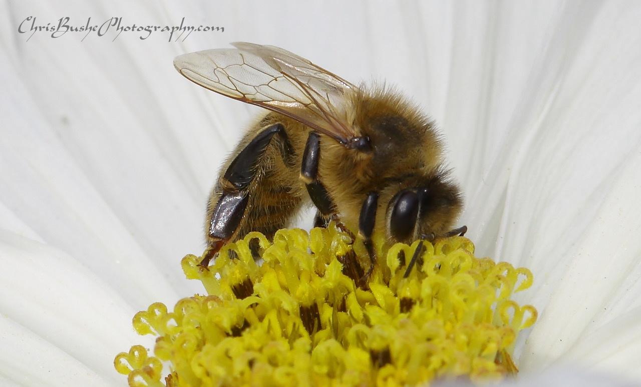 best Bee 6