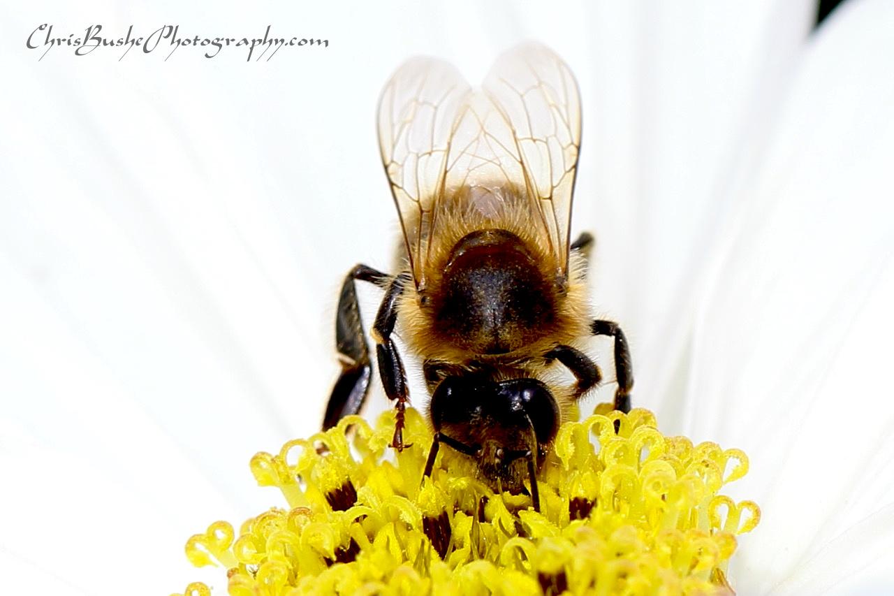 Best Bee 7